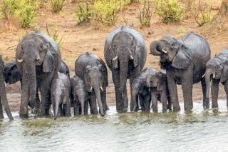 2M3A6903_-_African_Elephant.jpg