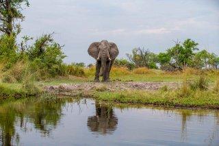 C16V3841_-_African_Elephant.jpg