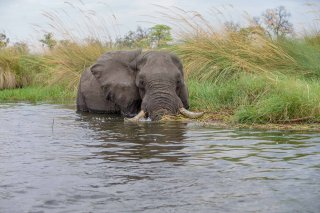 C16V3856_-_African_Elephant.jpg