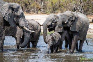C16V3903_-_African_Elephant.jpg