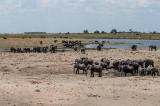 C16V4159_-_African_Elephants.jpg