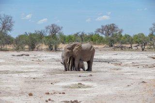 C16V4429_-_African_Elephant.jpg