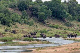 C16V8400_-_African_Elephant.jpg