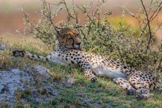 2M3A3592_-_Cheetah.jpg