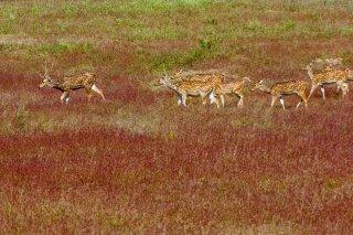 IMG_7004_-_Spotted_deer.jpg