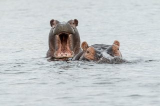 2M3A4024_-_Hippopotamus.jpg