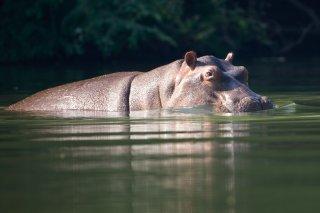 3T9P2355_-_Hippopotamus.jpg