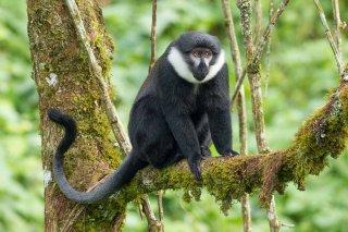 IMG_1656_-_LHoests_Monkey.jpg