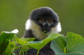 IMG_1940_-_LHoests_Monkey.jpg