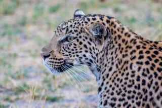 2M3A4499_-_Leopard.jpg