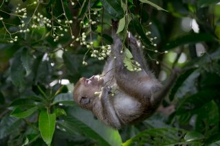 C16V5856_-_Long-tailed_Macaque.jpg