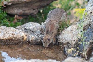 C16V2279_-_Rabbit.jpg