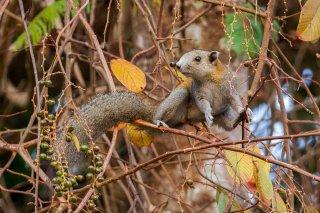IMG_2340_-_Variable_Squirrel.jpg