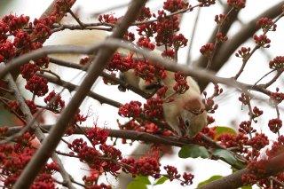 IMG_2726_-_Variable_Squirrel.jpg