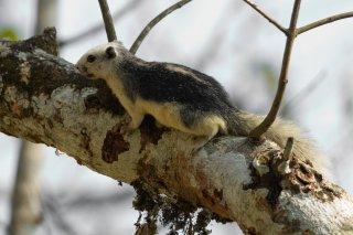 IMG_2950_-_Variable_Squirrel.jpg