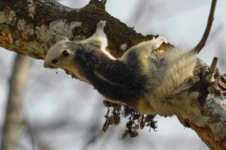 IMG_2952_-_Variable_Squirrel.jpg