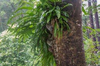 IMG_0962_-_Sunda_Flying_Lemur.jpg