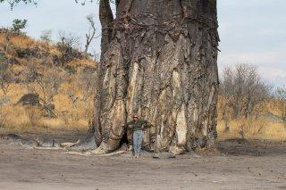 Boabab-Tree.jpg